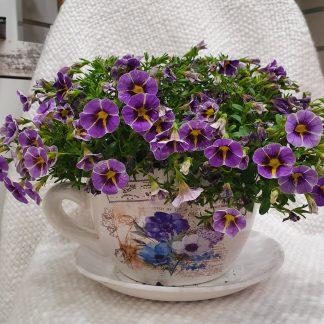 Cup of flowering brew