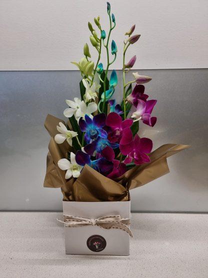 Perth Lockdown Specials orchid arrangement